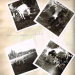 Senja, Kielo ja vasikat