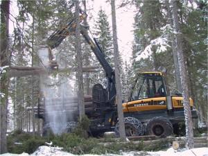 puu metsä puunkorjuu talvi