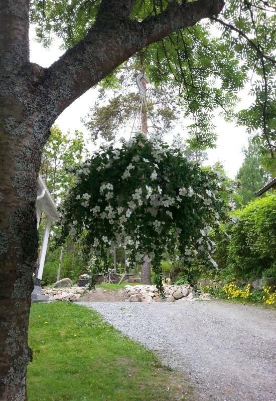 Puunoksaan kiinnitetty kukka-amppeli toivottaa tervetulleeksi tähän pihaan.