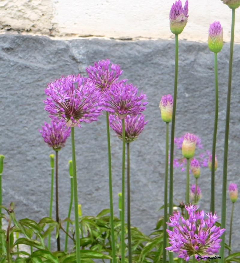 Museon edustalla on lämmin paikka, josta löytää kevään ensimmäiset kukat