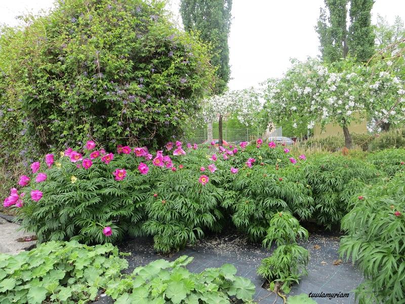 Puutarhassa voi tutustua moniin kukkiin, joita voisi yrittää kasvattaa itsekin