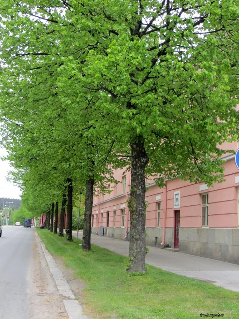 Tulliportinkadulla on kauniita vanhoja rakennuksia,mm. verovirasto ja kasarmialue