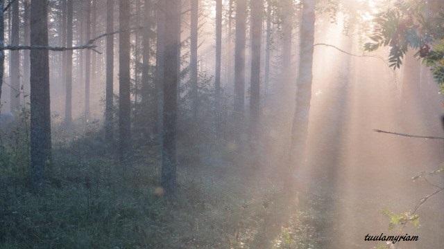 metsän valo