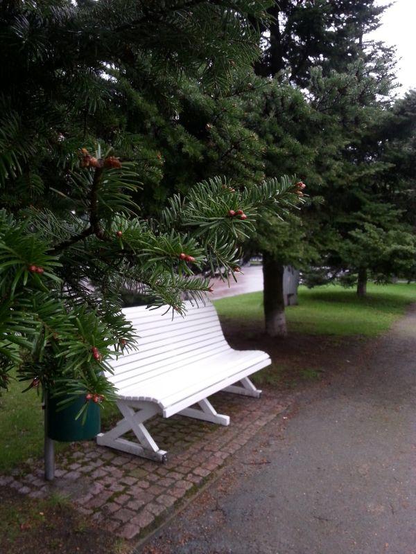 Hrr, näyttää lokakuulta, mutta kesäkuussa ollaan. Mäntyjen siimeksessä on rauhallinen paikka istuskella.