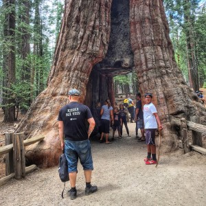 Amerikassa kaikki on suurta, etenkin nämä puut.