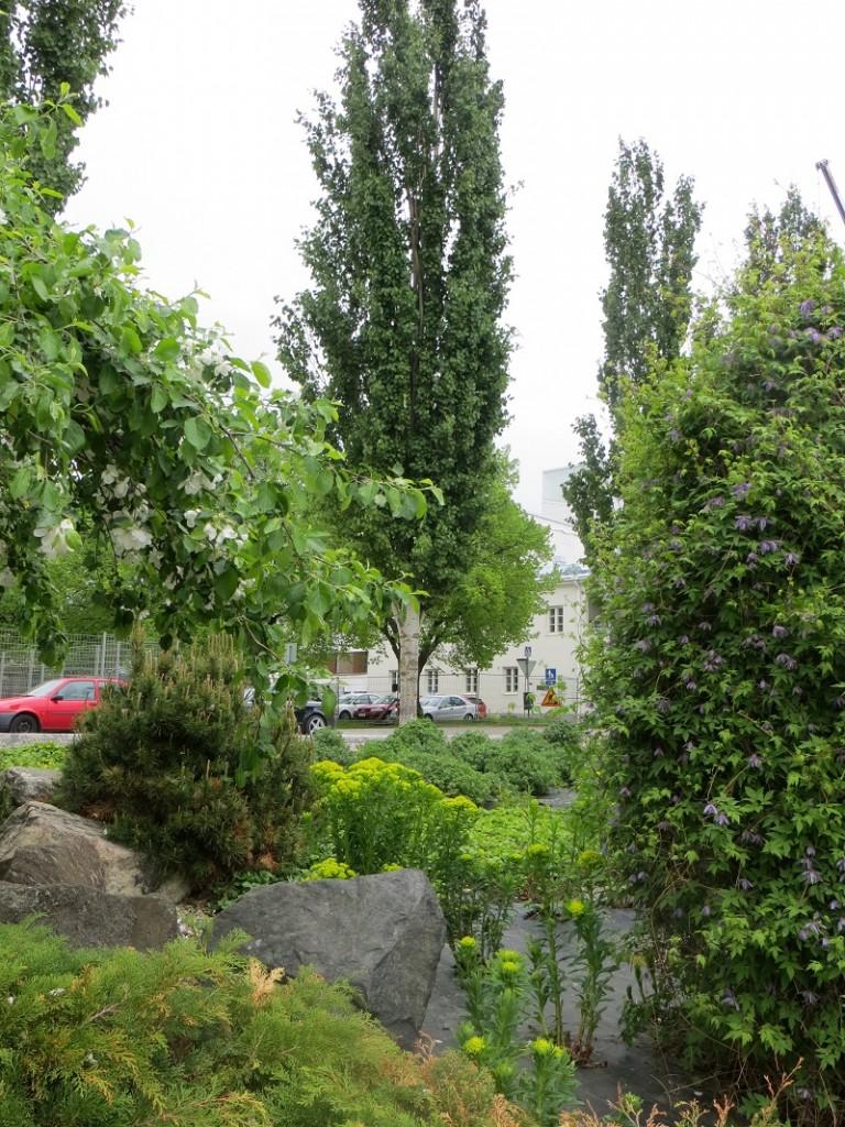 Puut osana puutarhaa