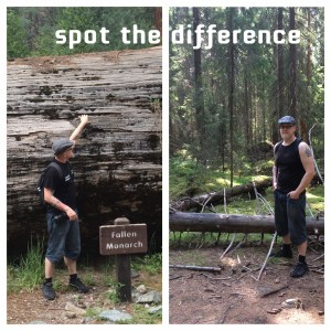 Kaksi kaatunutta puuta eri mantereilla: meren takana ja kotona.