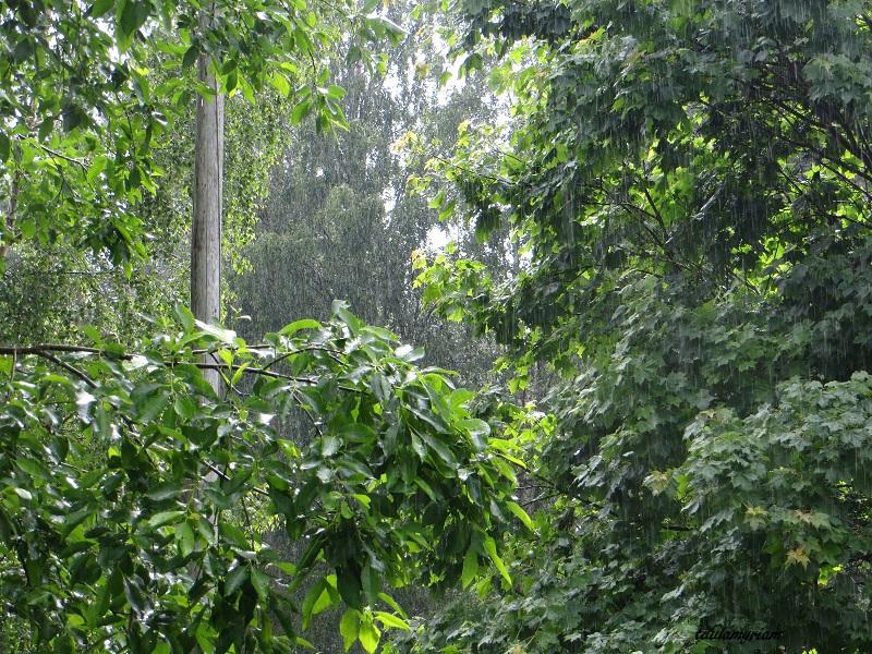 sadepisarat puiden lehdillä