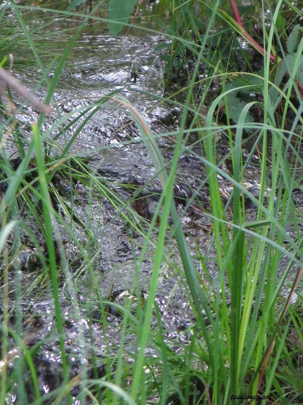Lammen eteläpuolelle laskee puro uutta vettä, pohjoispuolella on laskupuro, jota majavat patoavat. Lisäksi lampi saa raikasta vettä pohjan lähteistä.
