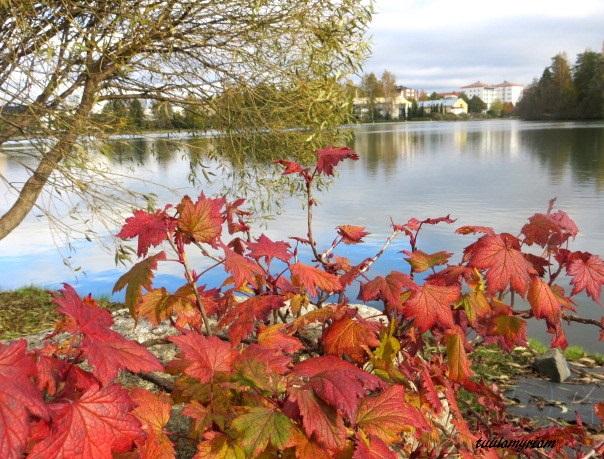 punaiset lehdet