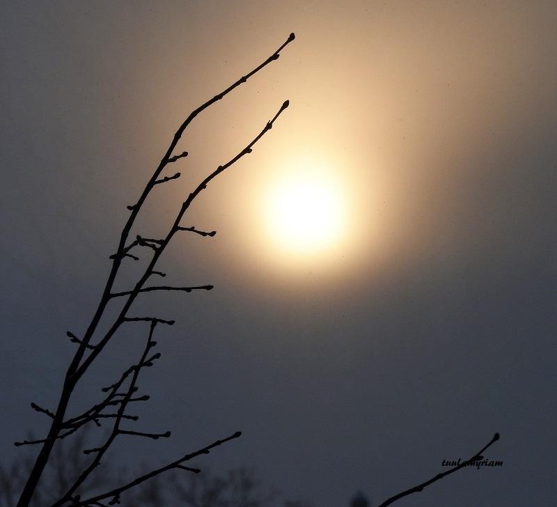 aurinko 5