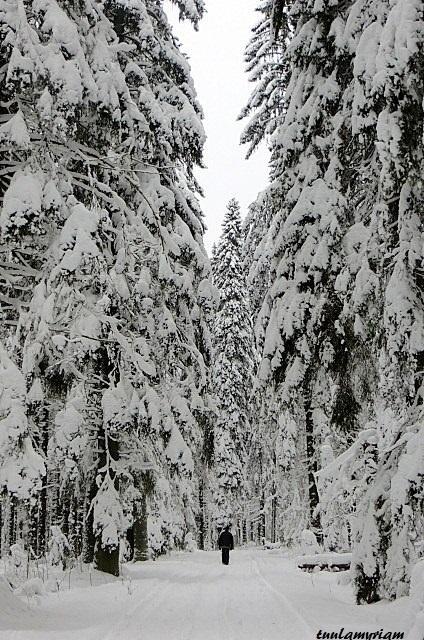 Metsässä mittasuhteet tulevat oikean kokoisiksi, olet palanen luonnon ihmettä.