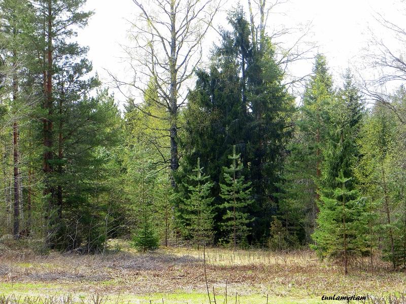 Sekametsä (nuorta, vanhaa ja kelottunutta puuta, kangasta ja lehtomaisemaa, lampia) on monien lintujen kesäkoti.
