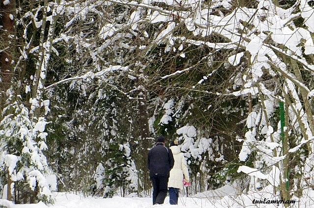 Talven polkua valaisee puhtaan valkea  lumi