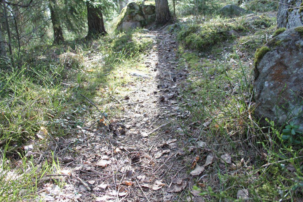 Metsäpolku käpyineen