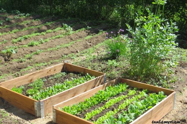 Tänä keväänä hankin laatikostoja salaaateille ja yrteille. Ensi keväänä laitan varmasti 2 kpl lisää. Vähemmän vesiheinää ja siistimmän näköistä.