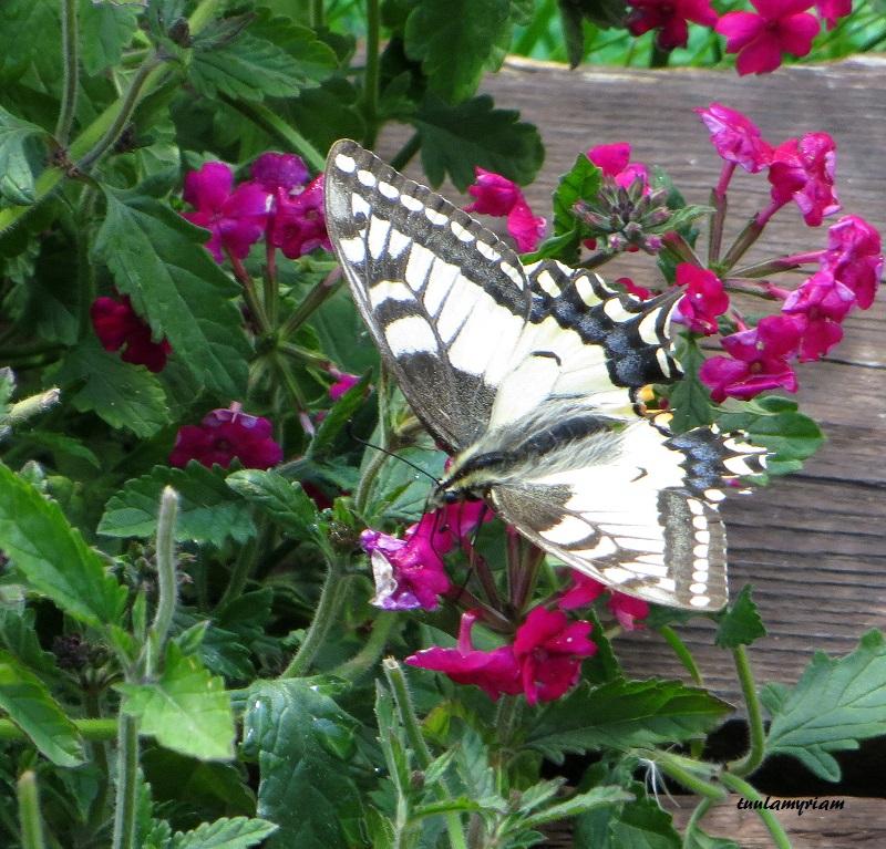 Kun on hyönteisiä ja kun on hyönteisiä, on kukkia ja kun on kukkia on perhosia ja mehiläisiä, kaikilla  on oma paikkansa luonnossa.