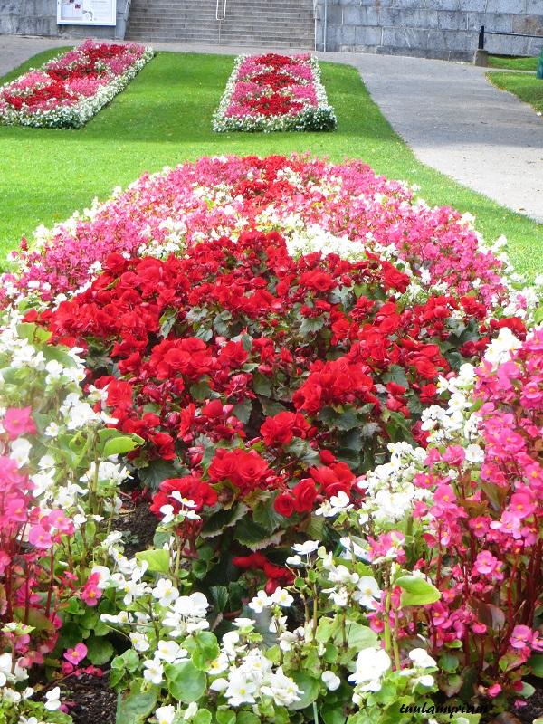 Snellmanin puisto, tuttu ja turvallinen,  aina yhtä värikäs kukkameri