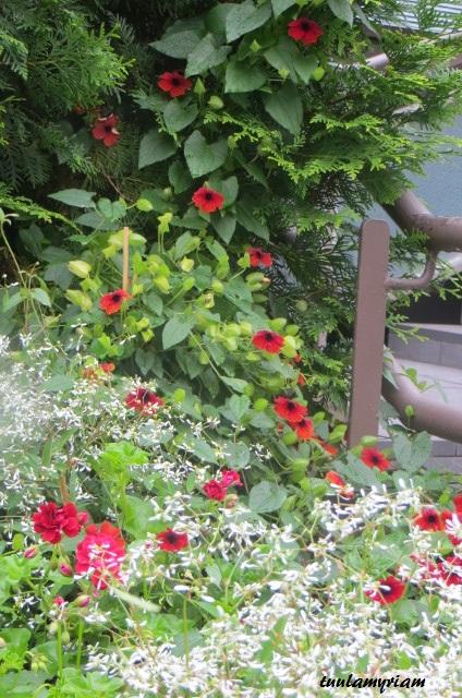 Kuopion OMT-Keskuksen sisääntulon edustan kukat