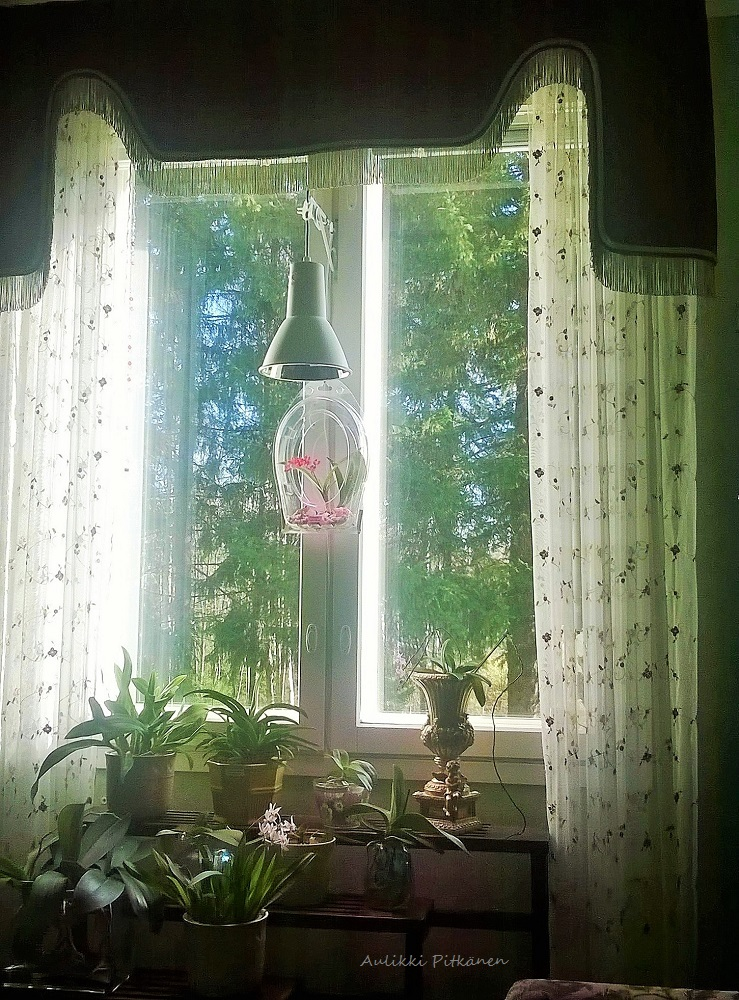 orkidearuukku-ikkuna-salissa-jg
