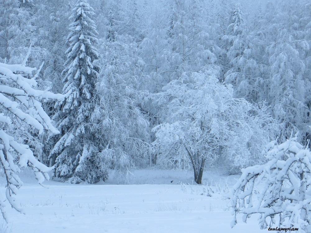Kanttilan lumisissa maisemissa