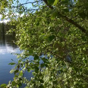 Kesäinen järvimaisema.